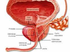 sangue-no-esperma