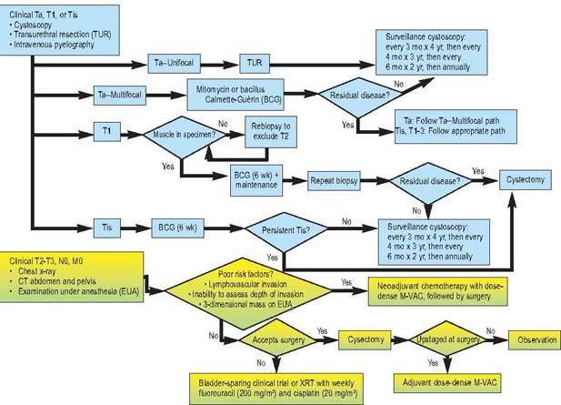 tumor vesicA cistoprostatectomia radical, no homem, e a exenteração pélvica anterioral 1